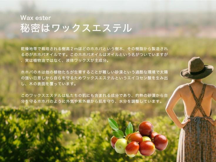 乾燥地帯で栽培されるホホバの樹脂ワックスエステルがスキンケアオイル原料